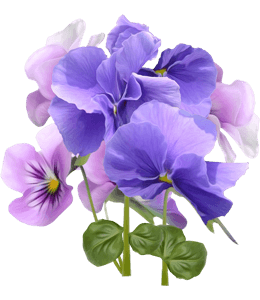 Blue and violet flowers