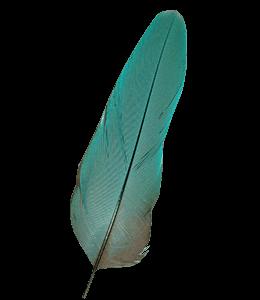 Bluish-green Bird Feather