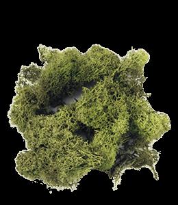 Clump of moss
