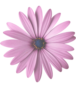 Flower with pink lavender petals