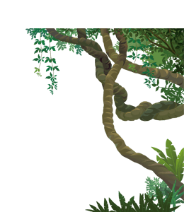 Forest trees and vines