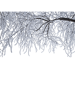 Frost Freezing leafless