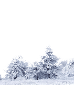 Gray snow coverd trees