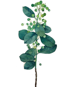 Green watercolor painting of leaves