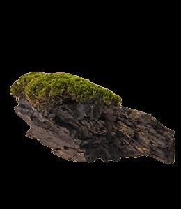 Greenery on Brown Rock
