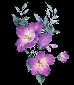 Illustration of mauve flowers