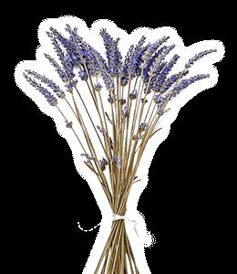 Lavender dried flowers