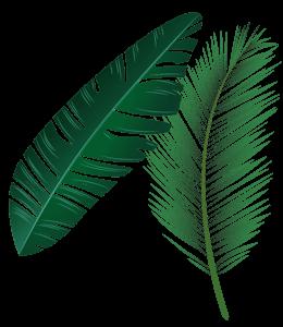 Leaves - Banana and Palm