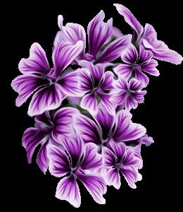 Mallow Stylized Flowers
