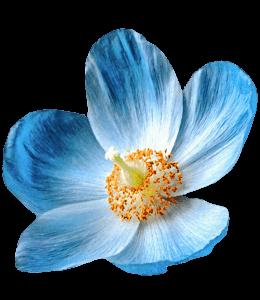 Medium Persian Blue