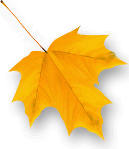 Orange-yellow autumn leaf