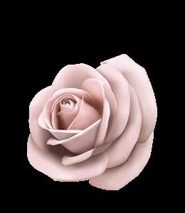 Pale Rose illustration