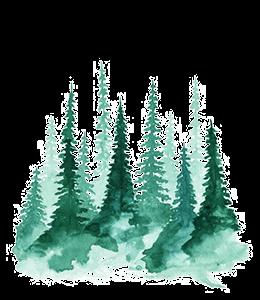 Pine trees on mountains