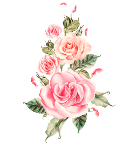 Pink roses water color painting