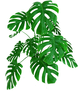 Plant with green leaves