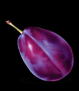 Prune Plum fruit