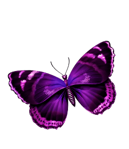 Purple butterfly illustration