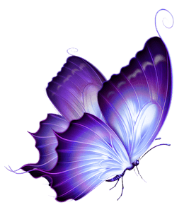 Purple colored butterfly