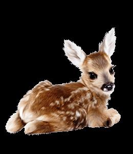 Reindeer fawn illustration