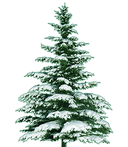 Tree with snow in winter