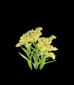 Light Goldenrod Yellow